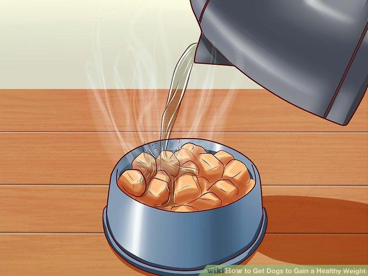 Fügen Sie Wasser zum Trockenfutter Ihres Hundes hinzu.
