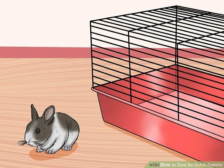 Halten Sie das Kaninchen nicht die ganze Zeit in seinem Käfig.