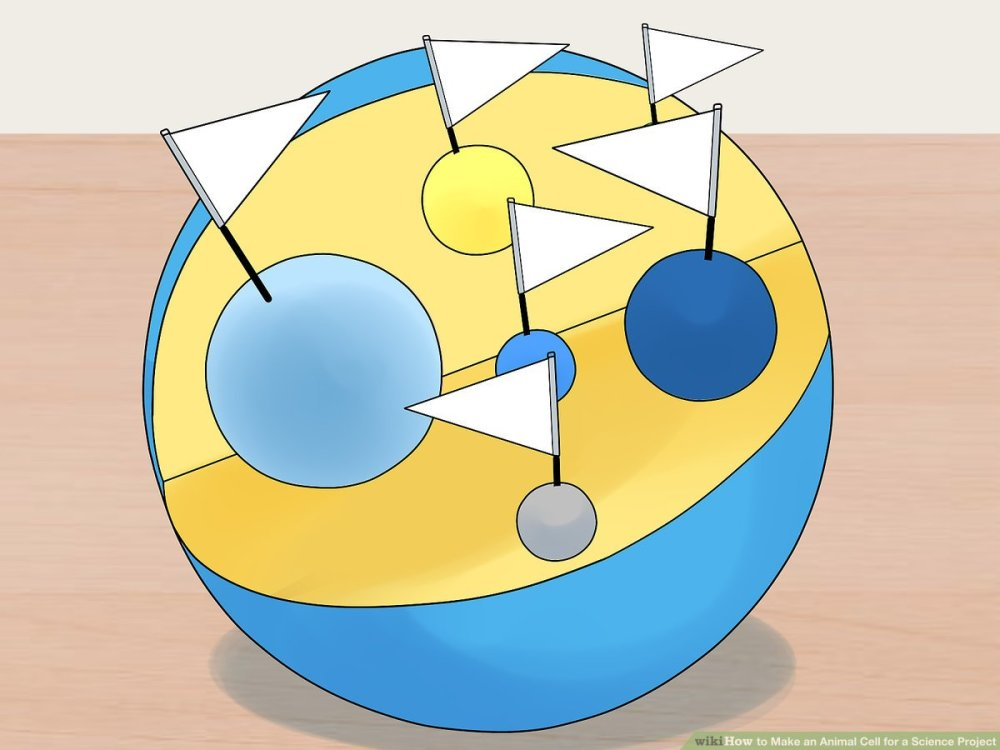 medium resolution of 4 Ways to Make an Animal Cell for a Science Project - wikiHow