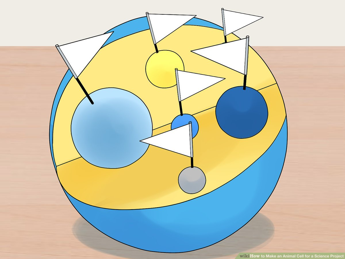 hight resolution of 4 Ways to Make an Animal Cell for a Science Project - wikiHow