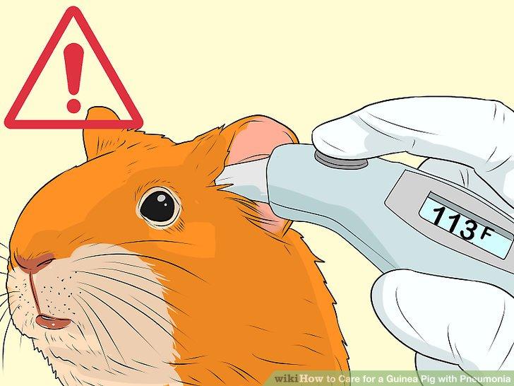 Check your guinea pigs temperature.