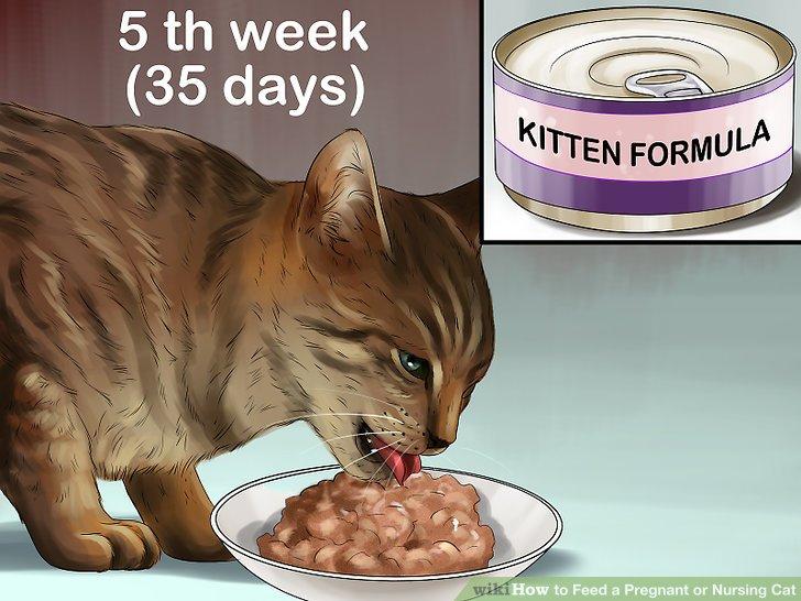 Wechseln Sie Ihre Katze zu einem nassen Kätzchenfutter.