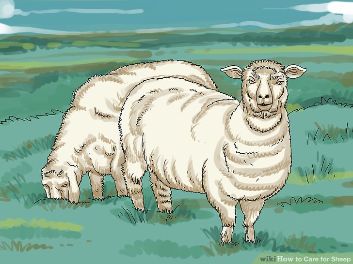 Stellen Sie sicher, dass Ihre Weide die Anzahl der Schafe unterstützt, die Sie auswählen.