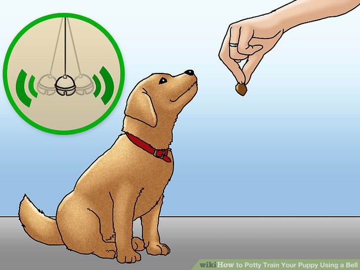 Teach your puppy to associate the bell with positive things.
