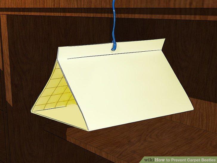 Hängen Sie klebriges Fliegenpapier in die Nähe von Fenstern und anderen potenziellen Eingängen.