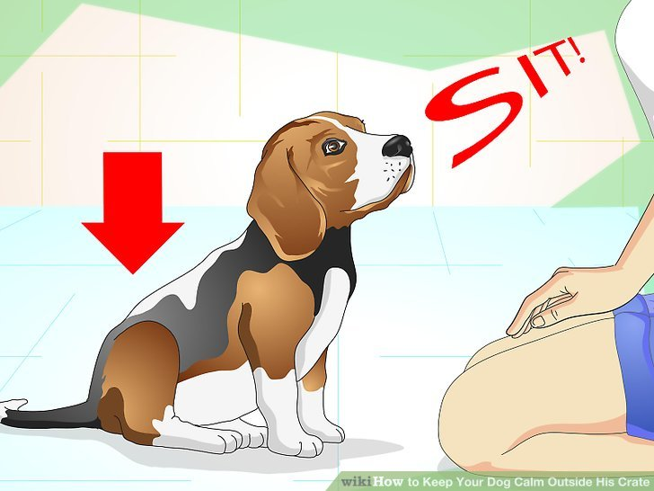 Bringen Sie Ihrem Hund grundlegende Sprachbefehle bei.
