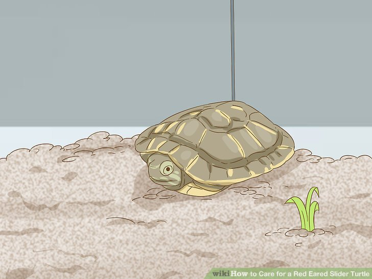 Give your new turtle some space.
