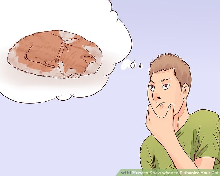 Stellen Sie fest, ob sich Ihre Katze schmerzfrei ausruhen kann.