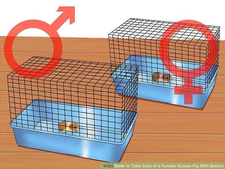 Bewahren Sie die männlichen und weiblichen Welpen nach dem Stillen in getrennten Käfigen auf.