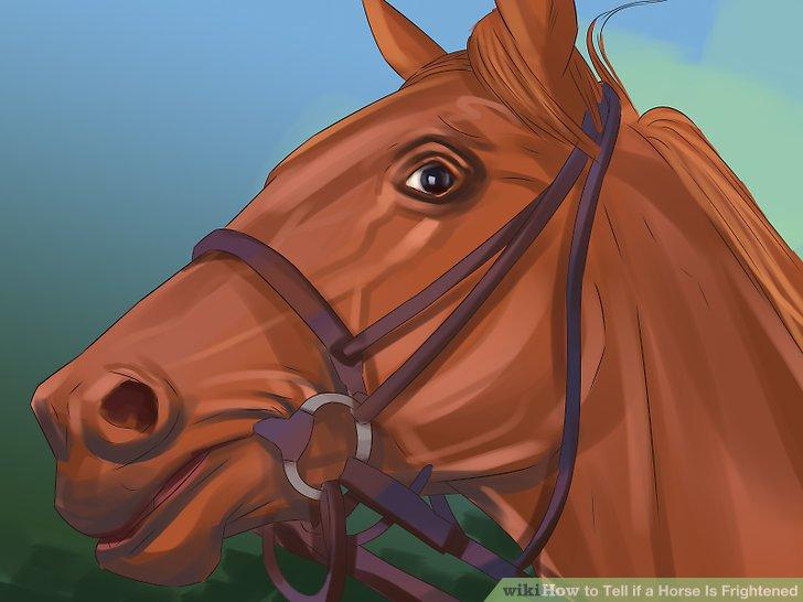 Vermeiden Sie Lob, wenn Ihr Pferd in Panik gerät.