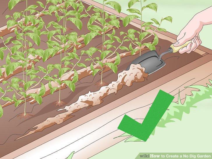 Create a No Dig Garden Step 19.jpg