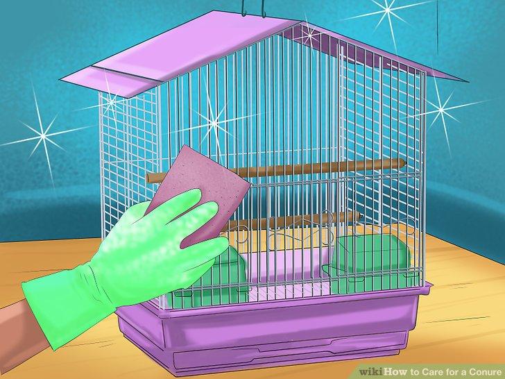 Reinigen Sie Ihren Conure-Käfig regelmäßig.