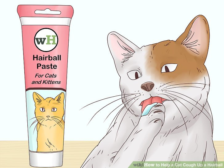 Give hairball paste to your cat to get the hairball moving.