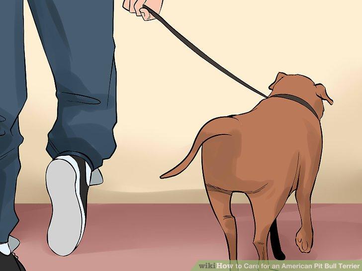 Nehmen Sie Ihren Pit Bull Terrier täglich mit.
