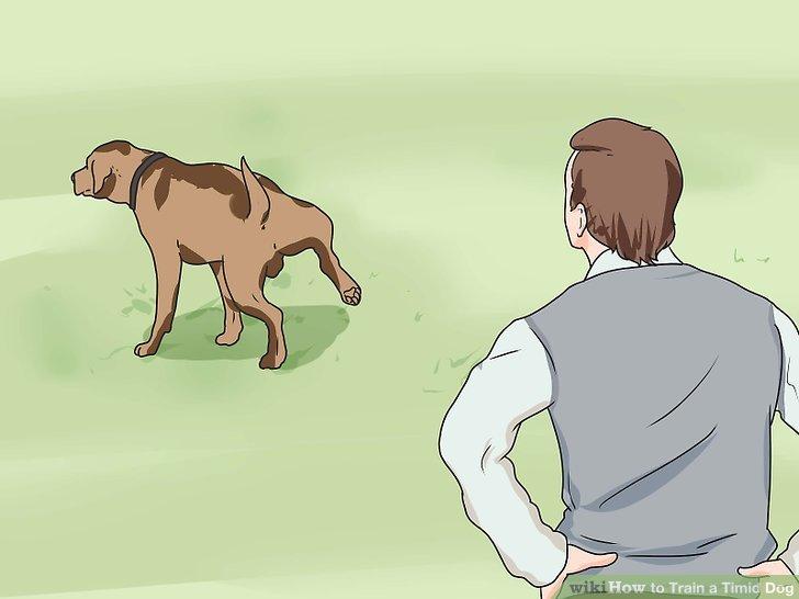 Trainieren Sie Ihren Hund, um draußen zu pinkeln.