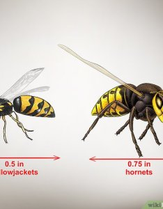 Image titled identify wasps step also ways to wikihow rh