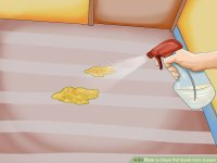 How to Clean Pet Vomit from Carpet (with Pictures) - wikiHow
