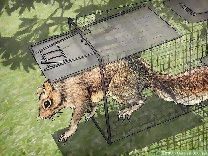Lassen Sie das Eichhörnchen los.