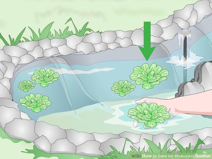 Füllen Sie Ihren Teich mit entchloretem Wasser.
