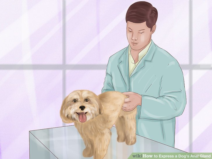 Position the dog in front of you in a standing position.