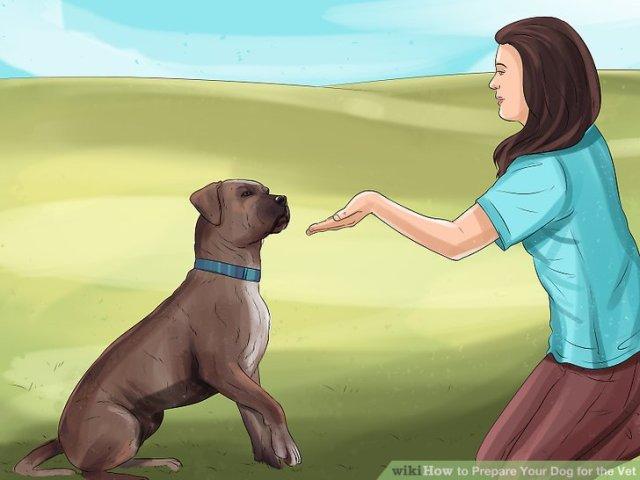 Prepare Your Dog for the Vet Step 1 Version 2.jpg