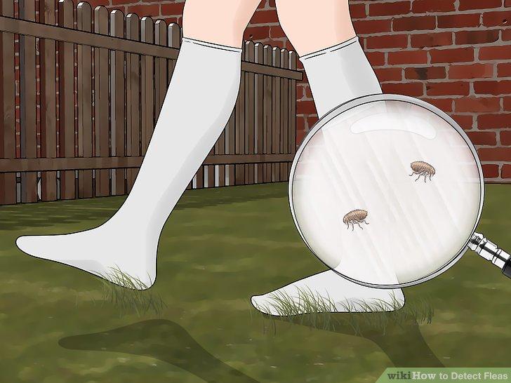 Gehen Sie mit weißen Baumwollsocken durch Ihr Haus.