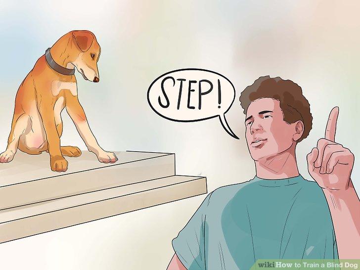 Sagen Sie Ihrem Hund, dass Sie einen Schritt oder einen Bordstein machen müssen.