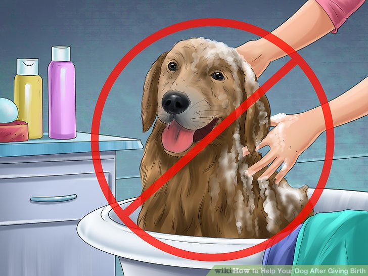 Do not bathe your dog immediately after birth.