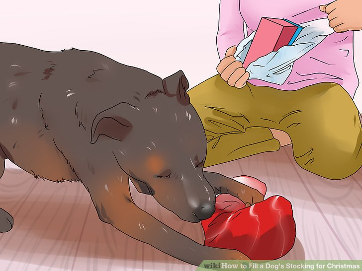 Helfen Sie Ihrem Hund, den Strumpf auszupacken.