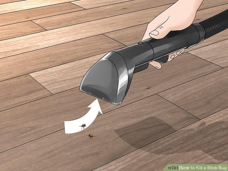 Vacuum the stink bug up.