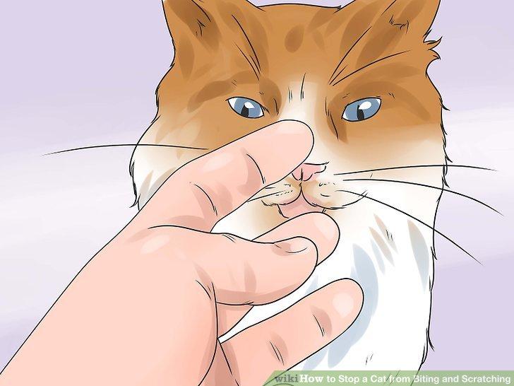 Bringen Sie Ihrem Kätzchen akzeptable Grenzen, wenn es ums Spielen geht.