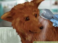 3 Ways to Get Dog Smell Out of the Carpet - wikiHow