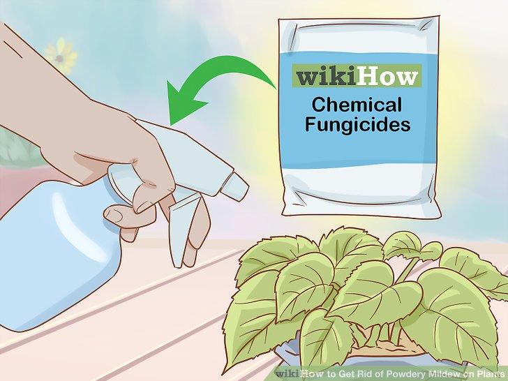 Verwenden Sie chemische Fungizide mit Vorsicht.