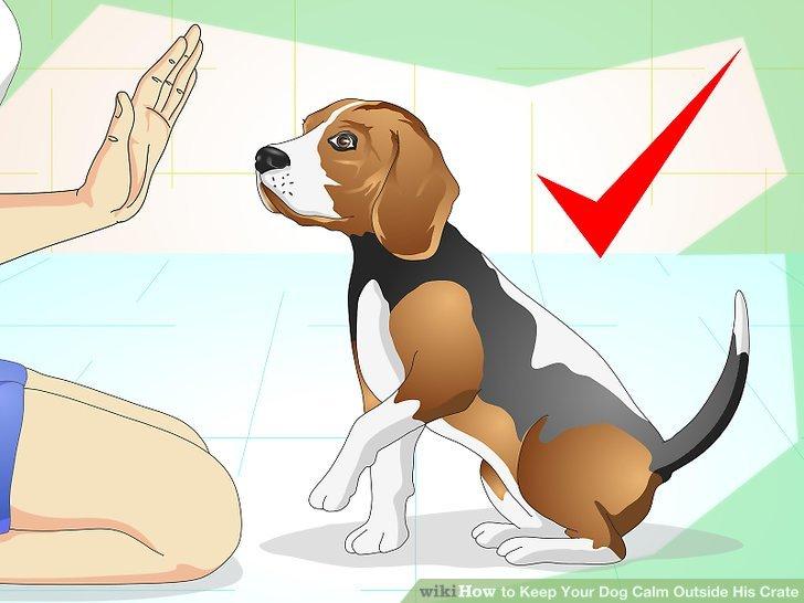 Legen Sie mit Ihrem Hund Indoor-Grundregeln fest.