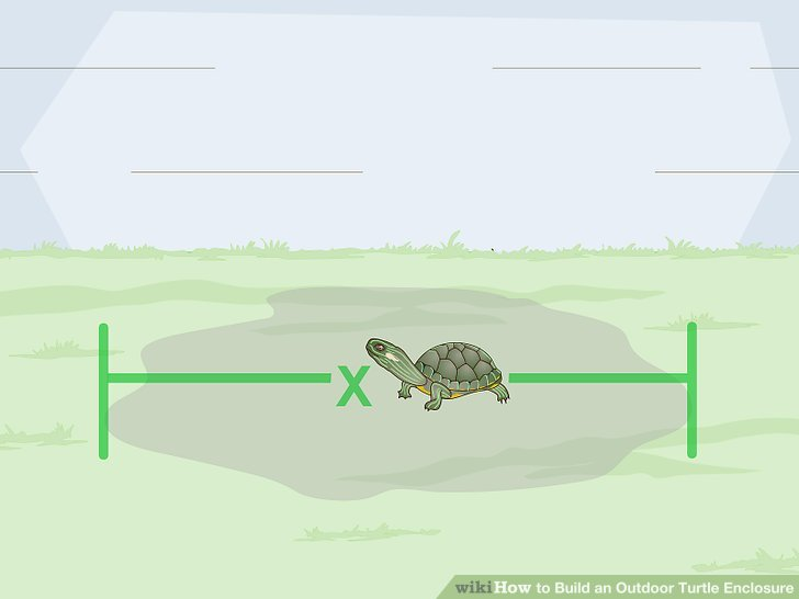 Legen Sie einige interaktive Spielzeuge und Gegenstände in das Gehege Ihrer Schildkröte.
