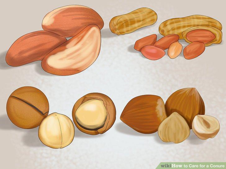 Binden Sie Nüsse in Ihre Diät ein.