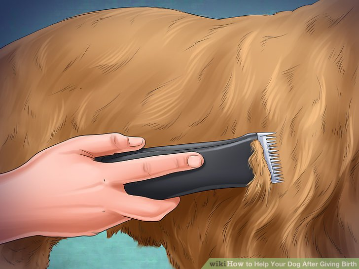 Trim hair on dogs with long fur.