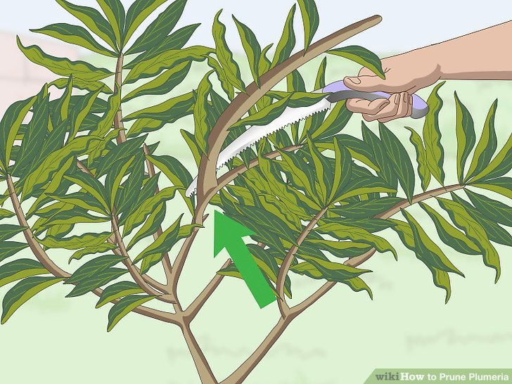 Prune off any unsightly or overgrown branches.