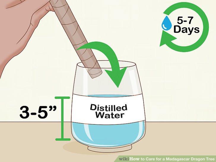 Legen Sie den Stielfuß in einen Wasserbehälter.