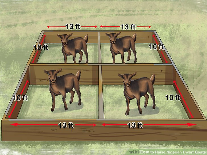 Set aside at least a 10 by 13ft (3.0 by 4.0m) romping space for each goat.