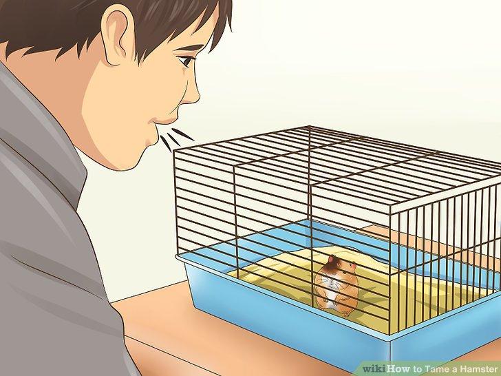 Helfen Sie Ihrem Hamster, Ihre Stimme zu erkennen.