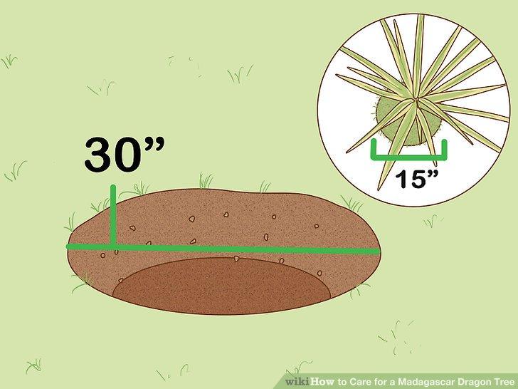 Grabe ein Loch, das doppelt so groß ist wie der Wurzelballen.