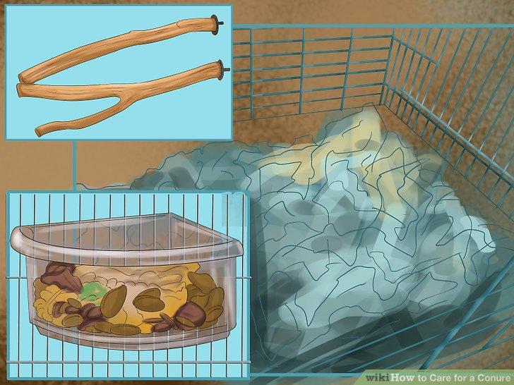 Legen Sie einige grundlegende Gegenstände in den Conure-Käfig.