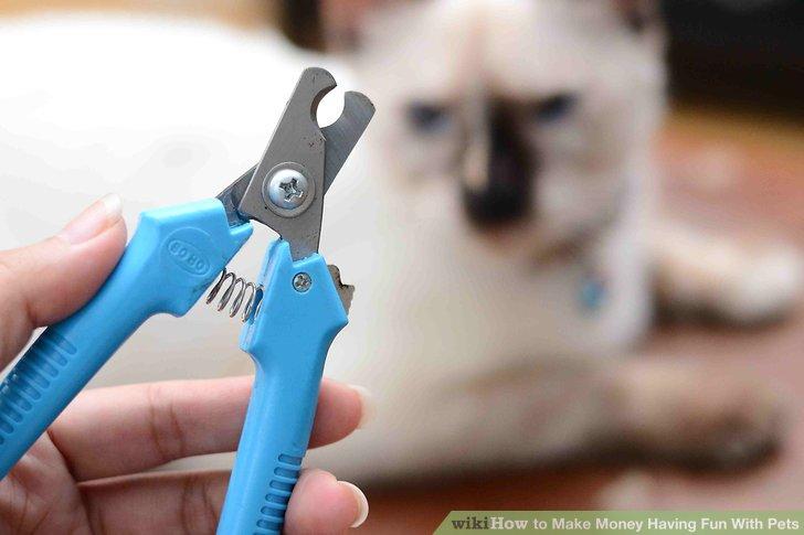 Erwägen Sie das Angebot von Tierpflegediensten als komplettes Geschäft oder zusätzlich zu anderen Haustierservices.