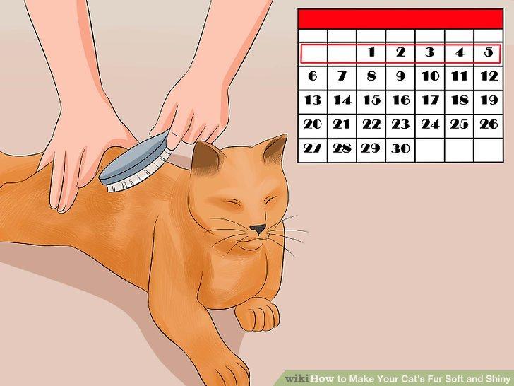 Entscheiden Sie, wie oft Ihre Katze gebürstet werden muss.