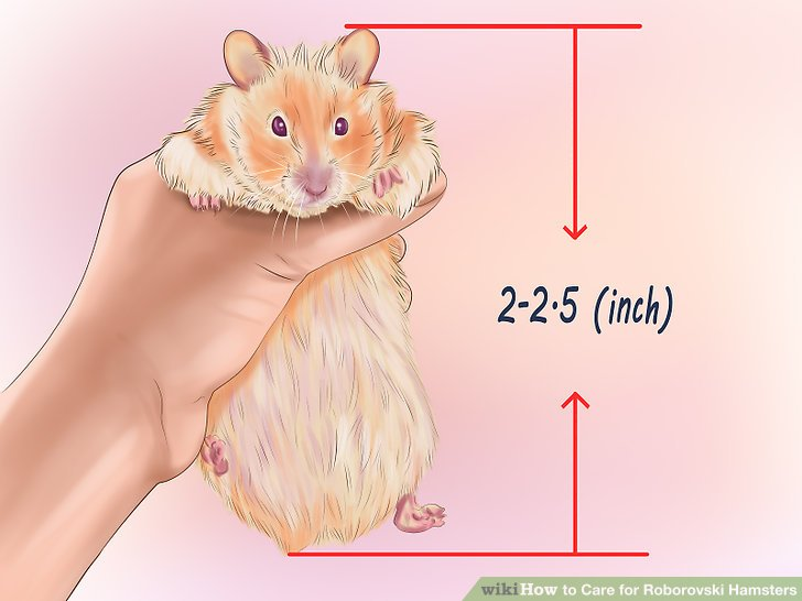 Wähle einen jungen Hamster.