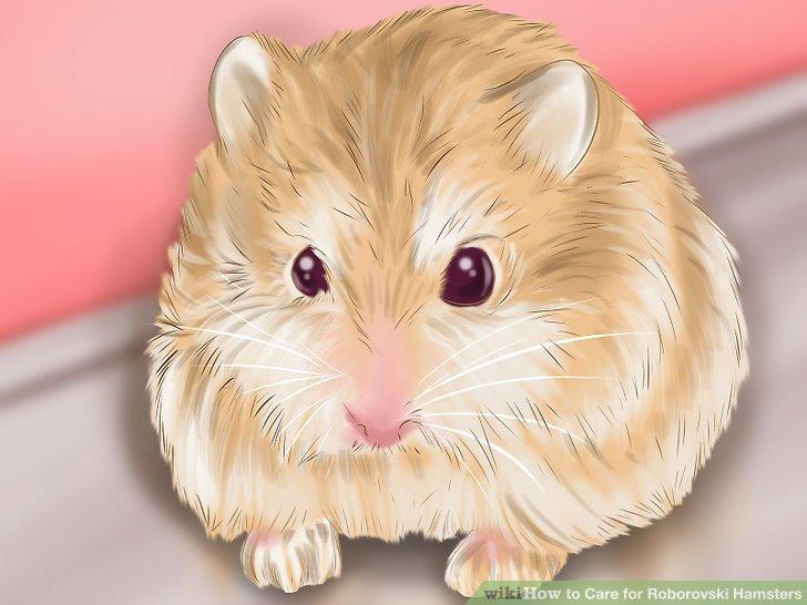 Kaufe deinen Hamster.