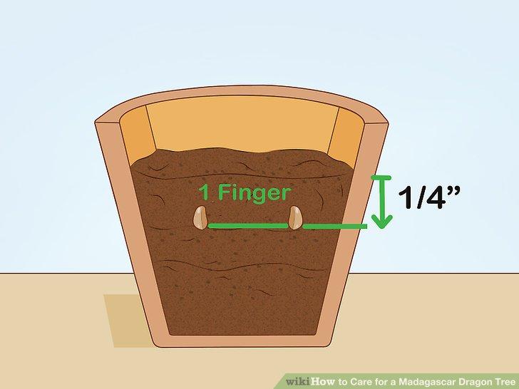 Begraben Sie die Samen in Blumenerde in einem kleinen Topf.