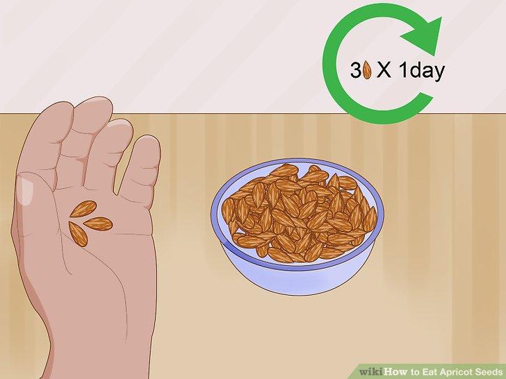 Beschränken Sie sich auf 3 kleine Aprikosensamen, wenn Sie erwachsen sind.