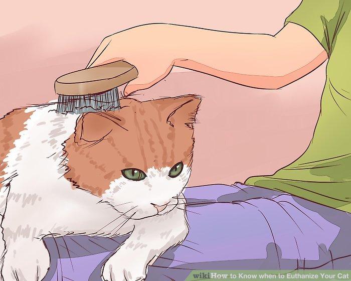 Betrachten Sie die Fähigkeit Ihrer Katze, sich selbst zu pflegen.